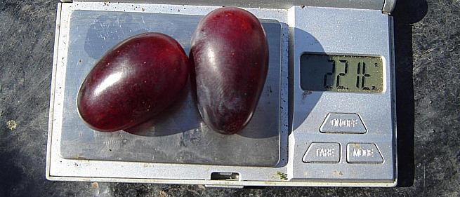 Ранний cорт винограда Президент от -Воронюк И. Н. фото id: 611489022